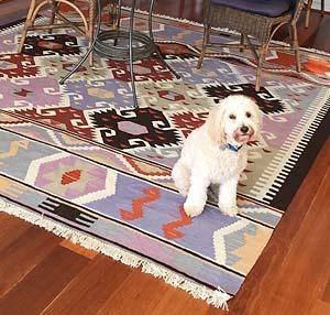 Dog on kilim rug