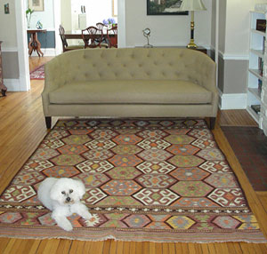 Dog on kilim rug in room
